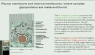VEPP online Lecture on The Importance of Sugars in Protein Function part 2